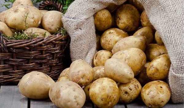 Khoai tây chứa rất nhiều vitamin B
