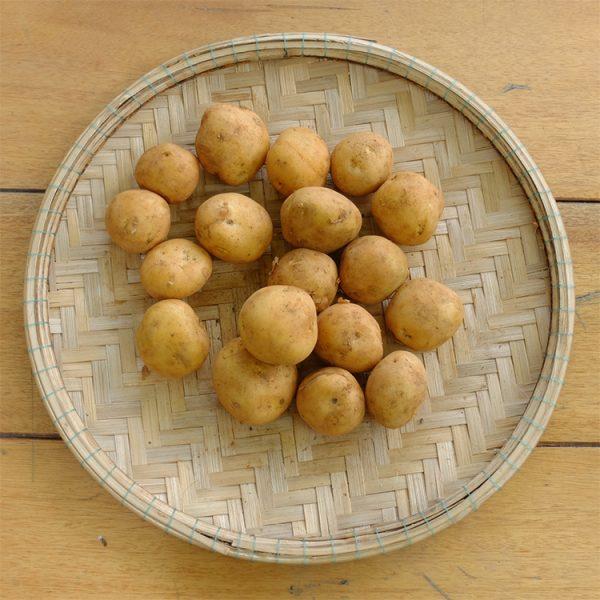Khoai tây có thể loại trừ độc tố